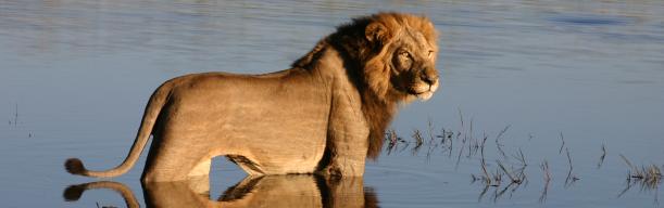 Elewana Luxury Air Safari