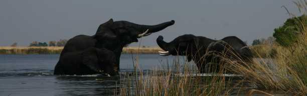 Highlights des Südens: Botswana und Krüger Nationalpark