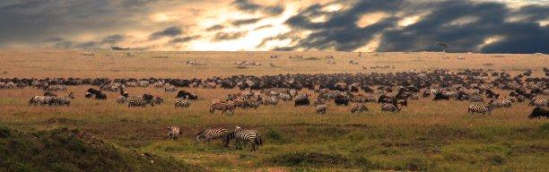 Wildnis zwischen Kilimanjaro & Serengeti