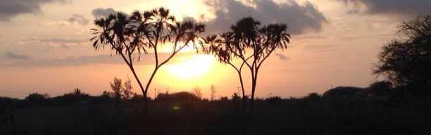 Waka Waka Tour - Ein Abend im Busch
