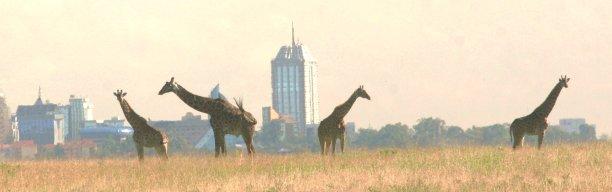 Nairobi Nationalpark Ausflug