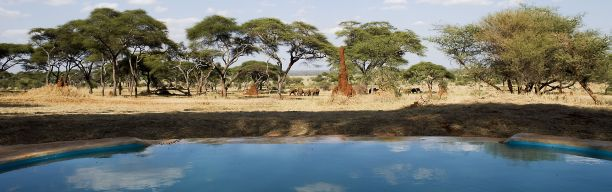 Tanzania in Style - Luxurious Road/Air Safari
